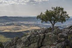Drzewo na wierzchołku obrazy stock