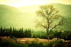 Drzewo na wzgórzu Zdjęcia Royalty Free
