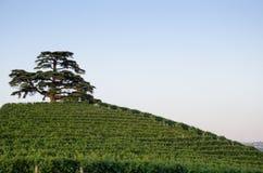 Drzewo na wzgórzu Obrazy Stock