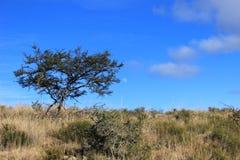 Drzewo na wzgórzu na gospodarstwie rolnym w Południowa Afryka Obraz Royalty Free