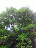 Drzewo na wzg?rzu obraz stock