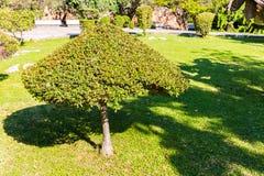 Drzewo na zielonej trawie i niebieskim niebie, Grecja, Chania, Crete Obraz Royalty Free