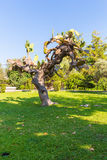 Drzewo na zielonej trawie i niebieskim niebie, Grecja, Chania, Crete Obrazy Stock