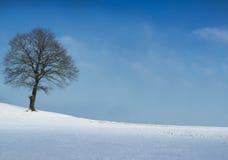 Drzewo na zima pogodnym dzień Fotografia Royalty Free