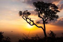 Drzewo na zmierzchu Obraz Royalty Free