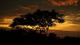 Drzewo na zmierzchu Zdjęcie Royalty Free