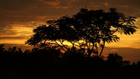 Drzewo na zmierzchu Zdjęcia Royalty Free