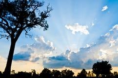 Drzewo na zmierzchu czasie, półmrok, świt na jeziorze Zdjęcie Royalty Free