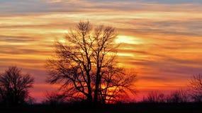 Drzewo na zmierzchu tle Obrazy Royalty Free