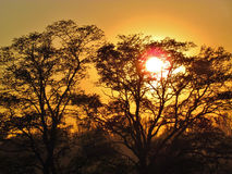 Drzewo na zmierzchu tle Obraz Stock
