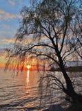 Drzewo na zmierzchu tle Zdjęcia Royalty Free