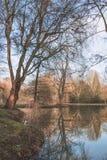 Drzewo nabrzeżem Obrazy Royalty Free