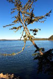 Drzewo nad oceanem Zdjęcie Royalty Free