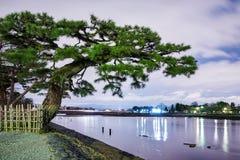Drzewo nad rzeką przy nocą zdjęcia royalty free