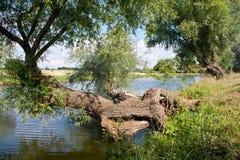 Drzewo nad wodą Obrazy Royalty Free