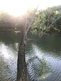 Drzewo nad wodą Zdjęcia Stock