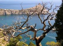 Drzewo nad zatoką Obraz Royalty Free