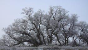 drzewo naga zima Zdjęcie Royalty Free
