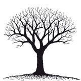 drzewo nagi wektor Zdjęcia Royalty Free