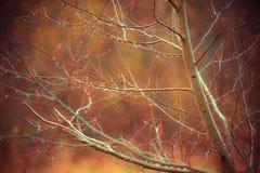Drzewo nagie i wodne krople Zdjęcie Royalty Free