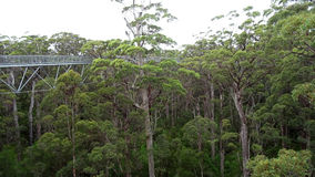 Drzewo nakrywa przejście przy Walpole zachodnią australią w jesieni fotografia stock