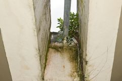 drzewo narastająca ściana fotografia royalty free