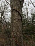 Drzewo Natura jesień Zdjęcie Stock