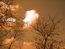 drzewo nieba Zdjęcie Royalty Free