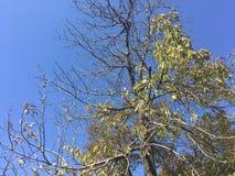 Drzewo, niebieskie niebo Obrazy Royalty Free