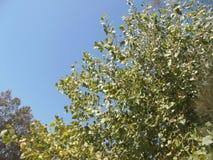 Drzewo & niebo Obrazy Stock