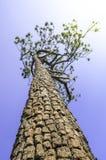 Drzewo niebo Obrazy Royalty Free