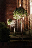 drzewo noc Obraz Royalty Free