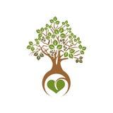 Drzewo obfitolistny ilustracji