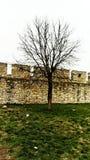 Drzewo obok ściennego defence Fotografia Stock