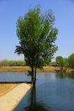 Drzewo obok jeziora Obraz Royalty Free