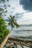 Drzewo obok oceanu obraz royalty free