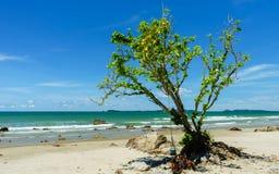 Drzewo obok plaży zdjęcia royalty free