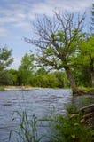 Drzewo obok rzeki Fotografia Royalty Free