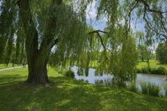 Drzewo obok rzeki, stram/ Fotografia Stock