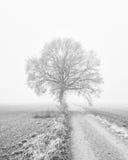 Drzewo obok wiejskiej drogi Zdjęcie Royalty Free