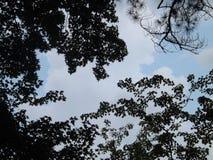 Drzewo obramia pięknego niebieskie niebo fotografia stock