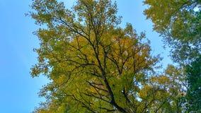 Drzewo od dna zdjęcia royalty free
