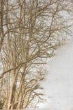 Drzewo odbijający w kałuży Fotografia Royalty Free