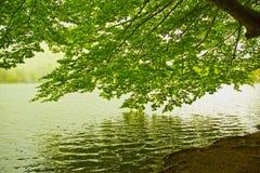 Drzewo odbijający w wodzie Fotografia Stock