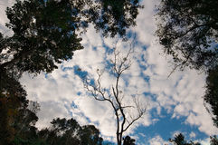 Drzewo odgórne dżdżownicy przyglądają się widok Thailand i niebo Zdjęcie Stock