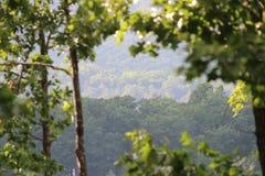 Drzewo Odgórny Mountain View Zdjęcie Royalty Free