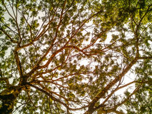 Drzewo odgórny widok Zdjęcia Stock