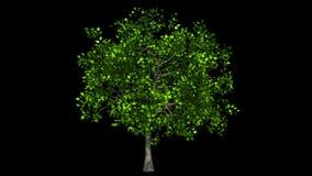 Drzewo odizolowywający na wiatrze zdjęcie wideo