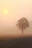 Drzewo Odizolowywający W ranek mgle Fotografia Stock