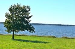 Drzewo, Odludny, obok Jeziornego Hefner, Oklahoma miasto obrazy royalty free